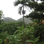Dschungel um My Son