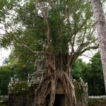 Tag 21 - Kambodscha - der Dschungel erobert die Tempel zurück